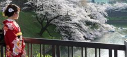 شکوفه زدن زودرس درختان گیلاس ژاپن بر اثر گرمایش جهانی