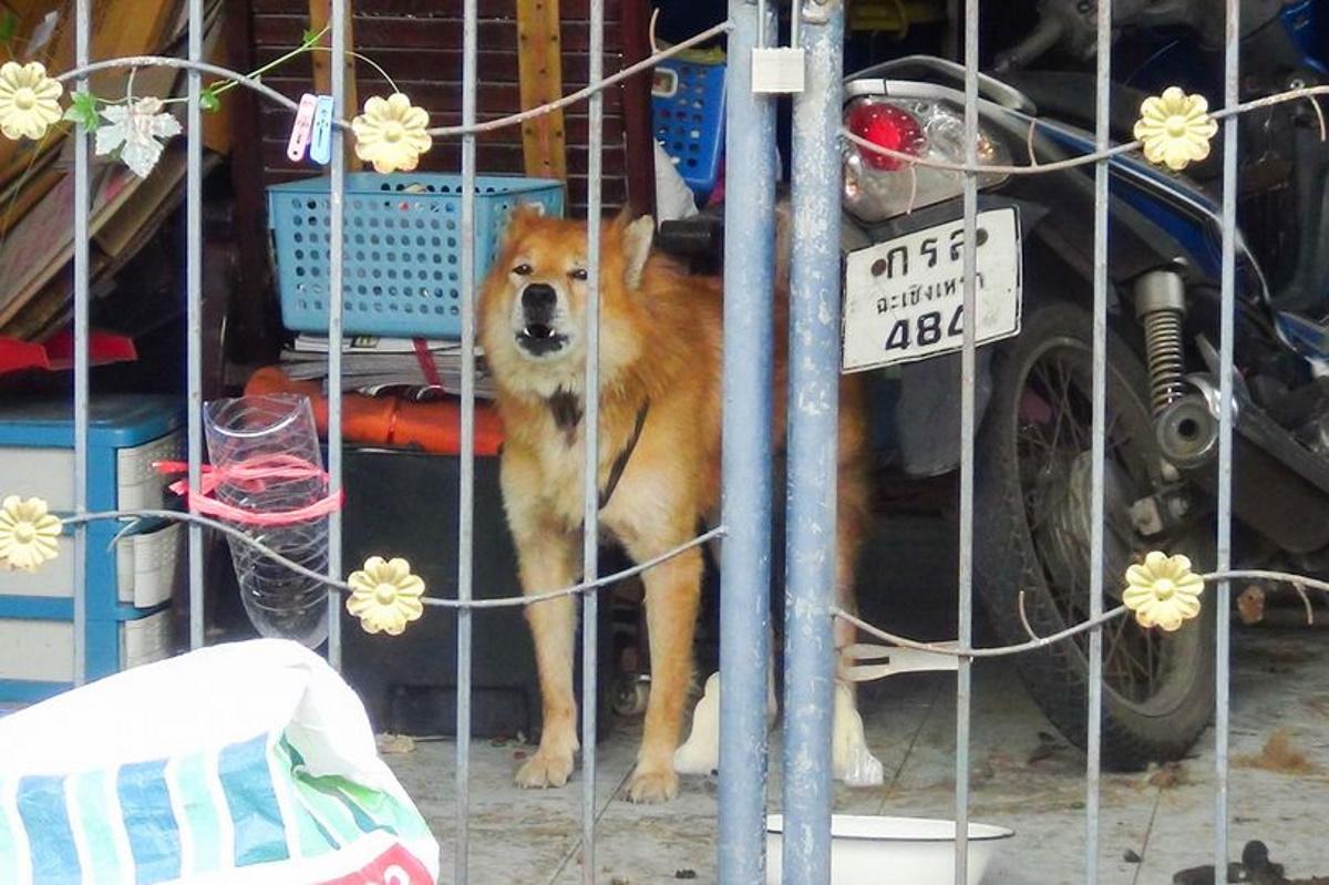 داستان سگ باوفایی که علیرغم مرگ صاحبش در اثر کرونا، هر روز انتظار او را می کشد