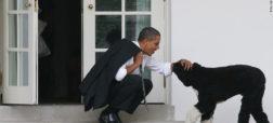 واکنش باراک اوباما و همسرش به درگذشت سگ خانوادگیشان