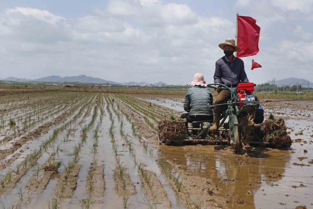 داوطلب شدن کودکان یتیم کره شمالی برای کار در معادن زغال سنگ و مزارع اشتراکی