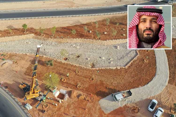 برنامه عربستان سعودی برای کاشت ۱۰ میلیارد اصله درخت در بیابان های این کشور