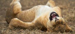 نگاهی به آثار مسابقه عکس طنز حیات وحش ۲۰۲۱