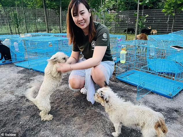ده ها سگی که قرار بود در جریان فستیوال گوشت سگ در جنوب چین سلاخی شوند توسط گروه های حامی حیوانات نجات یافتند.