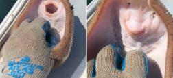 ماجرای ویدئوی سفره ماهی قلقلکی که این روزها فضای مجازی را پر کرده + ویدئو