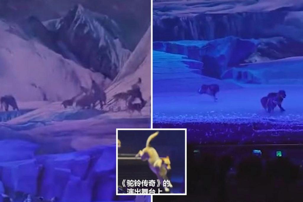 حمله ترسناک گله گرگ ها به بازیگران یک نمایش زنده در چین + ویدیو