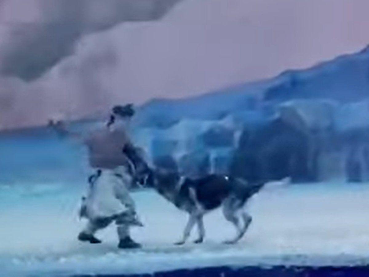 یک ویدیو ترسناک از یک نمایش زنده در چین پربازدید شده است پس از آن که گروهی از بازیگران نمایش توسط 30 قلاده گرگ تعقیب می شوند.