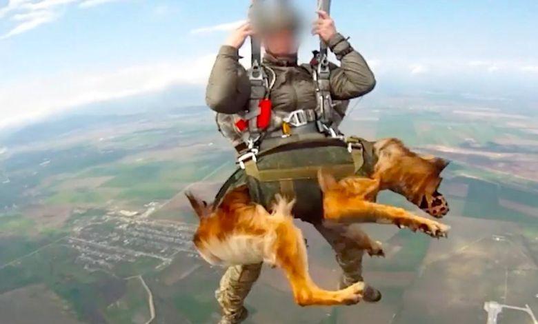 سگ های جنگی روسیه