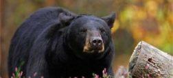 ورود خرس به مدرسه