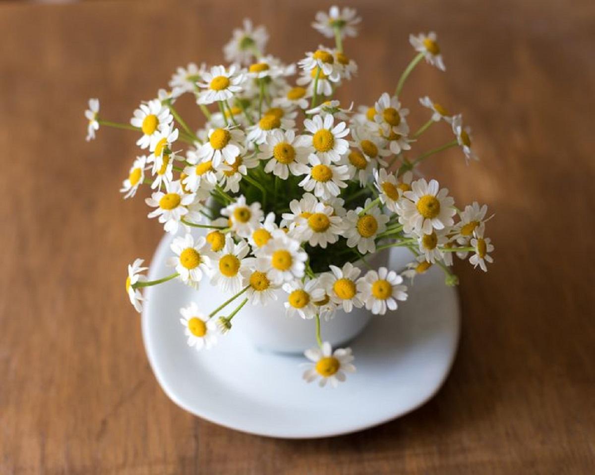 گیاه آپارتمانی با خواص دارویی