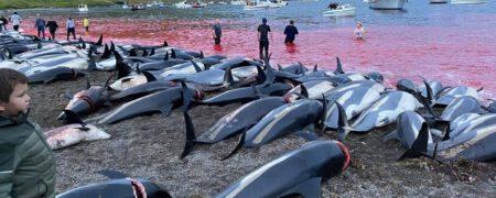 کشتار دلفین ها در دانمارک؛ بیش از ۱۰۰۰ دلفین در جزایر فاروی دانمارک قتل عام شدند