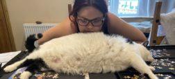 زنی انگلیسی برای لاغر کردن گربه ۱۳ کیلوییاش مجبور شد به در یخچال قفل بزند
