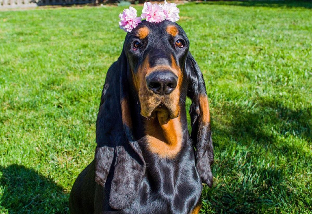 سگی با درازترین گوش های جهان