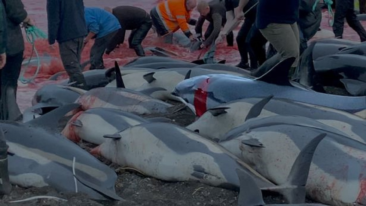 کشتار دلفین ها