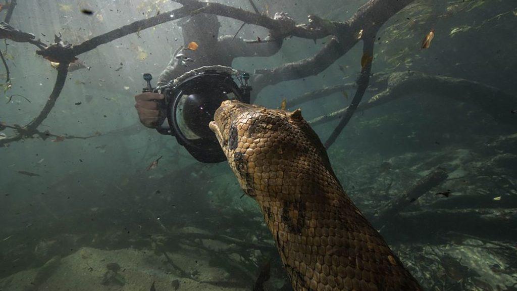 رویارویی سه غواص شجاع با آناکوندای ماده ۷ متری در جنگل های آمازون + تصاویر