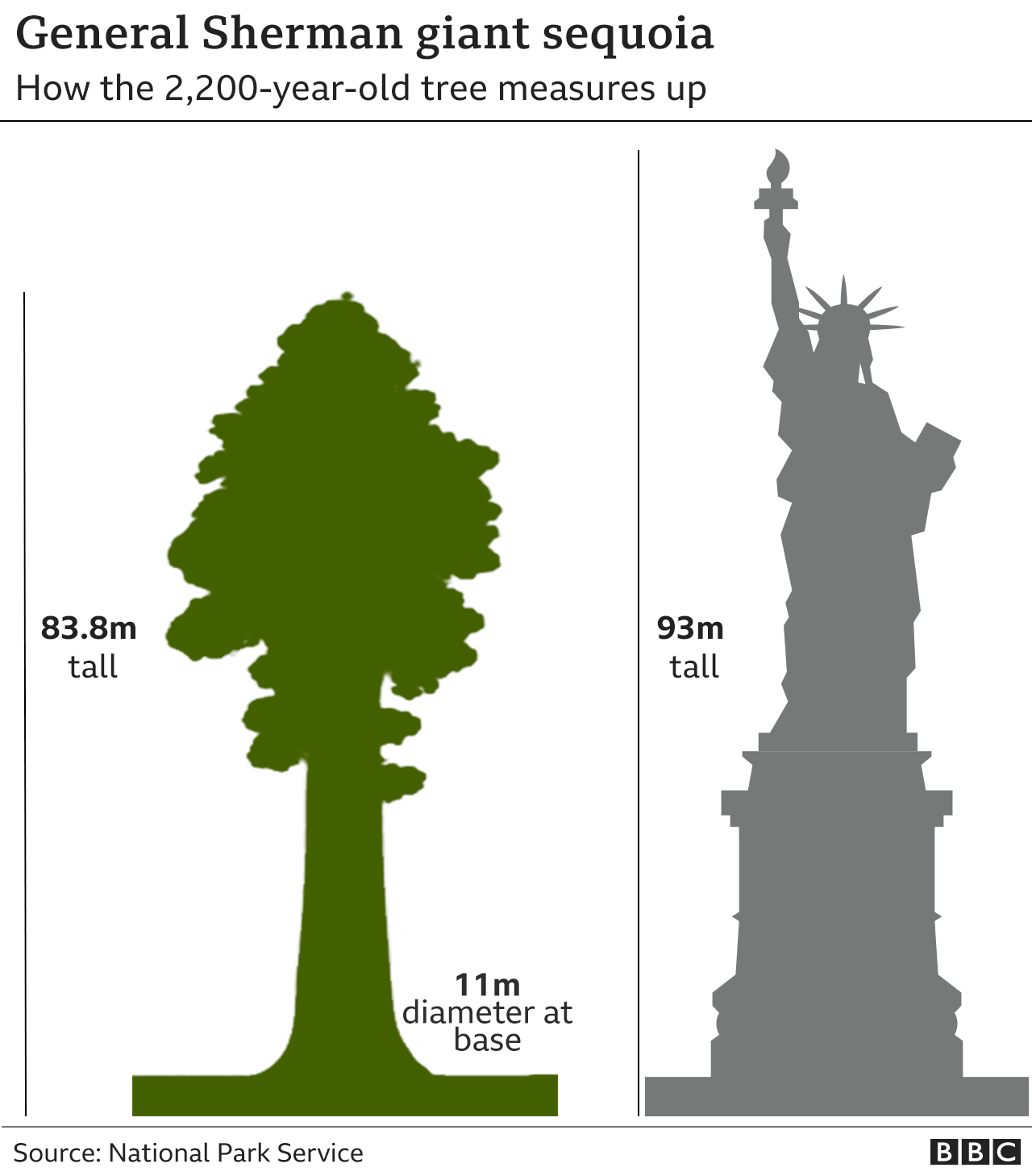 آتش نشانان و کارکنان پارک ملی سکویا در آمریکا تنه بزرگ ترین درخت جهان را با ورقه های آلومینیومی مقاوم در برابر شعله های آتش می پوشانند