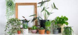 گیاهان آپارتمانی که هوا را خنک می کنند