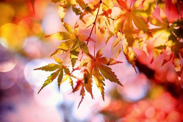 در ادامه این مطلب می خواهیم شما را با تکنیک ها و نکاتی آشنا کنیم که برای عکس گرفتن در فصل پاییز به آنها نیاز خواهید داشت.