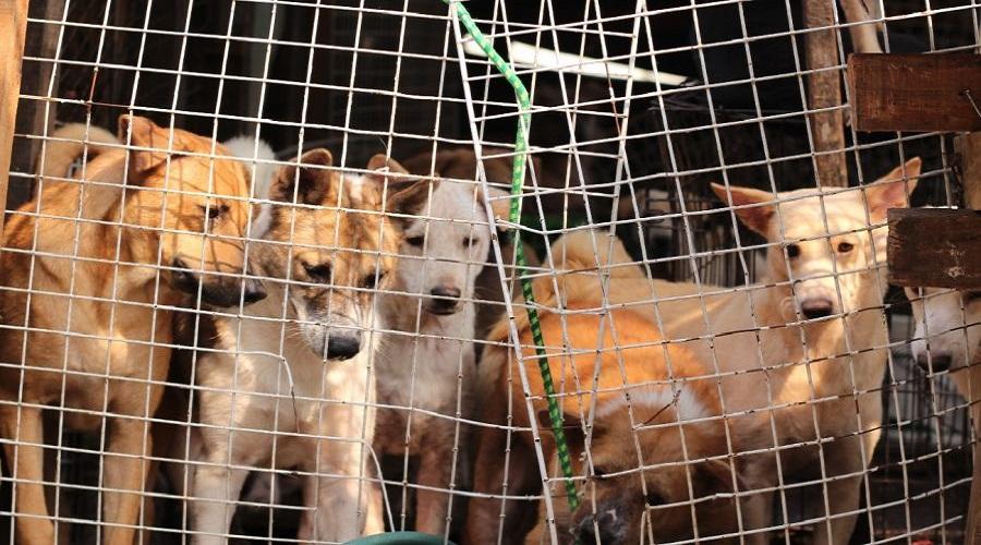 رئیس جمهور کره جنوبی در صدد ممنوع کردن مصرف گوشت سگ در این کشور