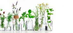 بهترین داروهای گیاهی را بشناسید