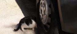 قانون جدید انگلیس در حمایت از گربه ها