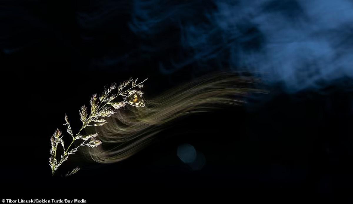 جشنواره عکاسی لاک پشت طلایی