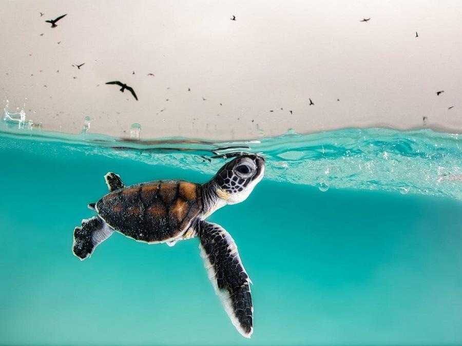 نگاهی به تصاویر برگزیده مسابقه عکاسی اقیانوس ۲۰۲۱