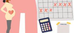 زمان تخمک گذاری زنان چه وقت است؟ و چگونه برای لقاح و بارداری برنامهریزی کنید؟